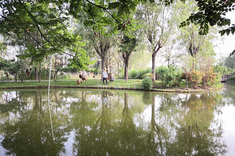 龙湾别墅实景图